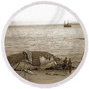 Humpback Whale On A Monterey Beach California  Circa 1896. Round Beach Towel