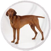 Hungarian Vizsla Dog Round Beach Towel