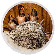 Hungry Baby Swallows - Antelope Island - Utah Round Beach Towel by Gary Whitton