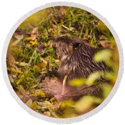 Hungry Beaver Round Beach Towel