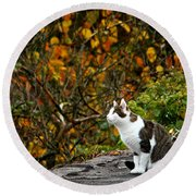 Hungry Cat Round Beach Towel