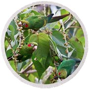 Hungry Chiriqui Conures Round Beach Towel