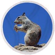 Hungry Ground Squirrel Round Beach Towel
