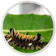 Hungry Hairy Caterpillar Round Beach Towel