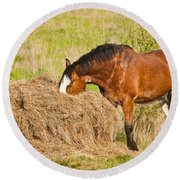Hungry Horse Round Beach Towel