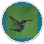 Hungry Little Hummingbird 4 Round Beach Towel