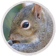 Hungry Squirrel Round Beach Towel