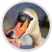 Hungry Swan Round Beach Towel
