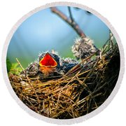 Hungry Tree Swallow Fledgling In Nest Round Beach Towel