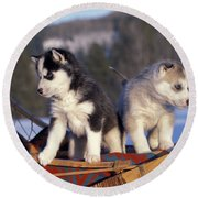 Huskies On A Sled Round Beach Towel