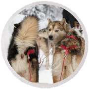 Husky Dogs Pull A Sledge  Round Beach Towel