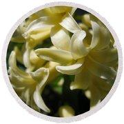 Hyacinth Named City Of Haarlem Round Beach Towel