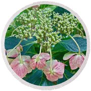 Hydrangea With A New Look Round Beach Towel