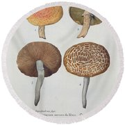 Hypodendrums Fagi And Queris Round Beach Towel