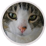 I See You Cat - Square Round Beach Towel