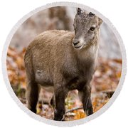 Ibex Pictures 10 Round Beach Towel
