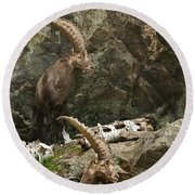Ibex Pictures 112 Round Beach Towel
