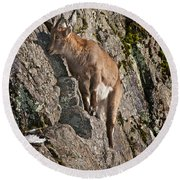 Ibex Pictures 151 Round Beach Towel