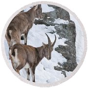 Ibex Pictures 171 Round Beach Towel