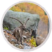 Ibex Pictures 174 Round Beach Towel