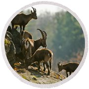 Ibex Pictures 176 Round Beach Towel
