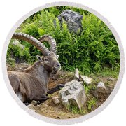 Ibex Pictures 64 Round Beach Towel