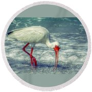 Ibis Feeding Round Beach Towel