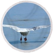 A Gull Performing Ice Ballet Round Beach Towel