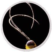 Ichneumon Wasp Antennae Round Beach Towel