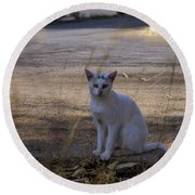 If Cats Could Talk Round Beach Towel