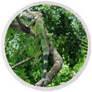 Iguana In A Tree Round Beach Towel