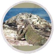Iguana In The Sun Round Beach Towel