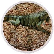 Iguana With A Smile Round Beach Towel