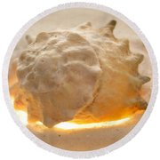 Illumination Series Sea Shells 17 Round Beach Towel