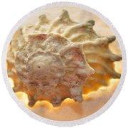 Illumination Series Sea Shells 20 Round Beach Towel