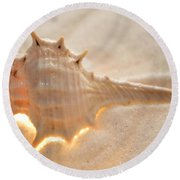 Illumination Series Sea Shells 6 Round Beach Towel