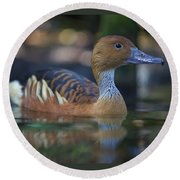 Img_8931 Fulvous Whistling Duck Round Beach Towel