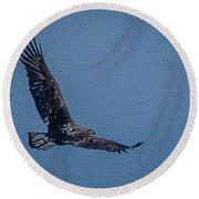 Immature Bald Eagle Round Beach Towel