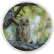 Immature Great Horned Owl Round Beach Towel