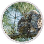 Immature Great Horned Owls Round Beach Towel