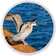Immature Herring Gull At The Harbour Round Beach Towel
