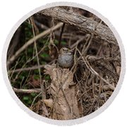 Immature White-throated Sparrow Round Beach Towel