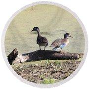 Immature Wood Ducks Round Beach Towel