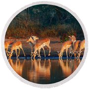 Impala Herd With Reflections In Water Round Beach Towel
