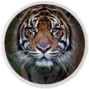 Tiger In Your Face Round Beach Towel