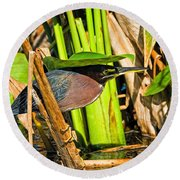 In The Shade Little Green Heron Round Beach Towel