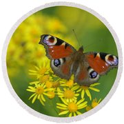 Inachis Io Butterfly On The Yellow Flowers Round Beach Towel