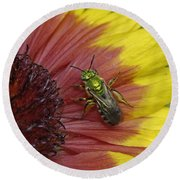 Indian Blanket And Bee Round Beach Towel