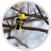 Indian Golden Oriole Round Beach Towel