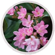 Indian Hawthorn Blossoms Round Beach Towel